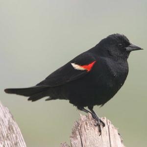 Bird photography at the park