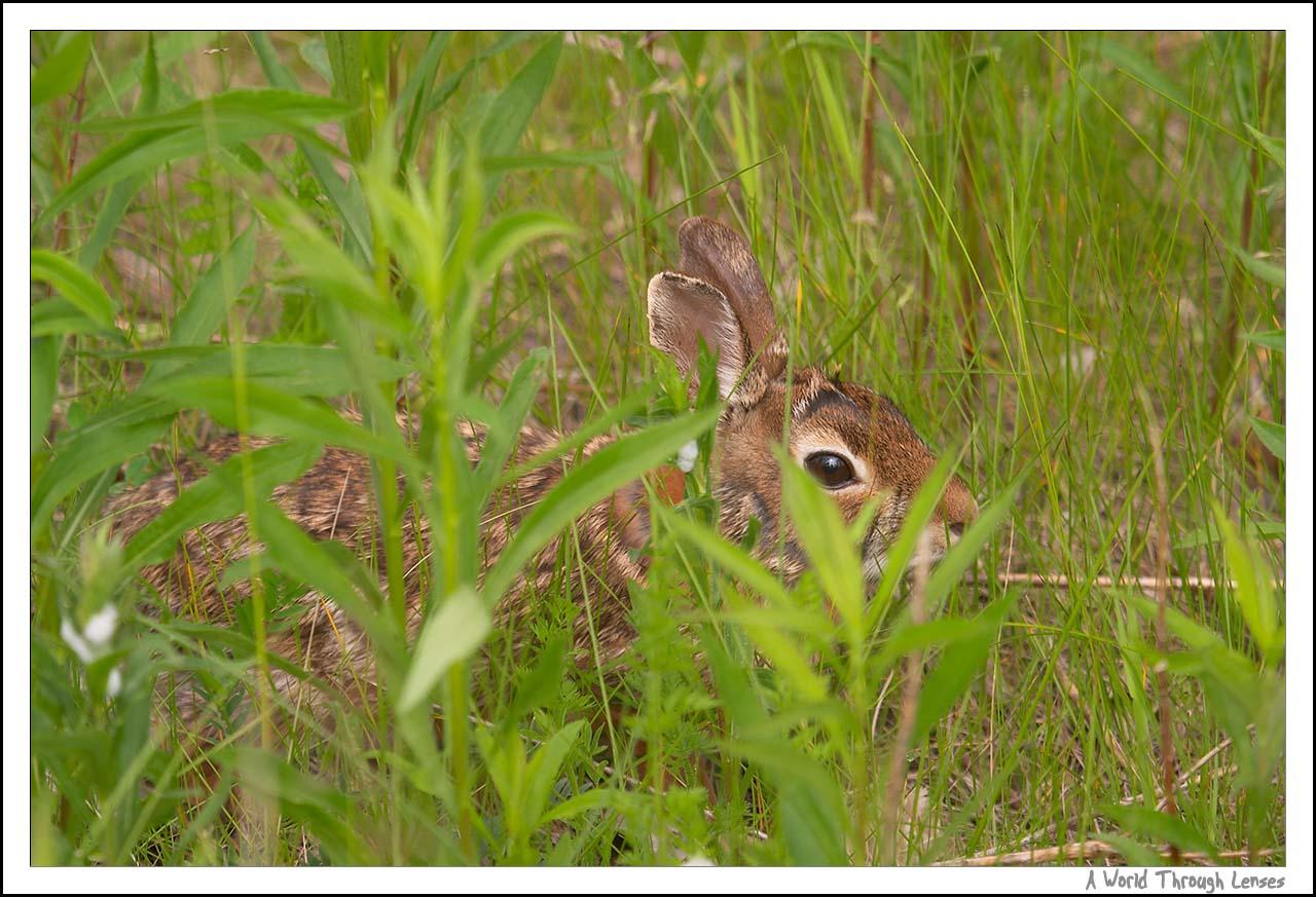 wild hare salon lakeland fl