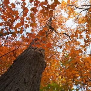 Fall colors in muskoka region